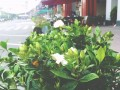 义乌最有腔调的一条街,你知道在哪里吗?